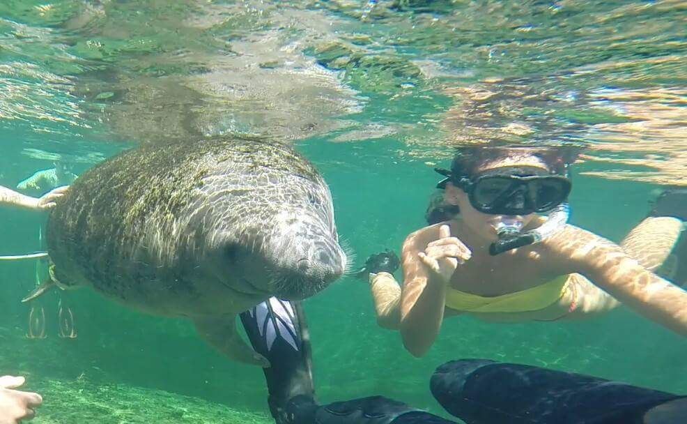Just swimming with my friend Mr. Manatee ;)