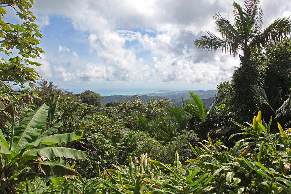 IMG_6642w rainforest