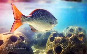 2014.11.Cayman.dive1w