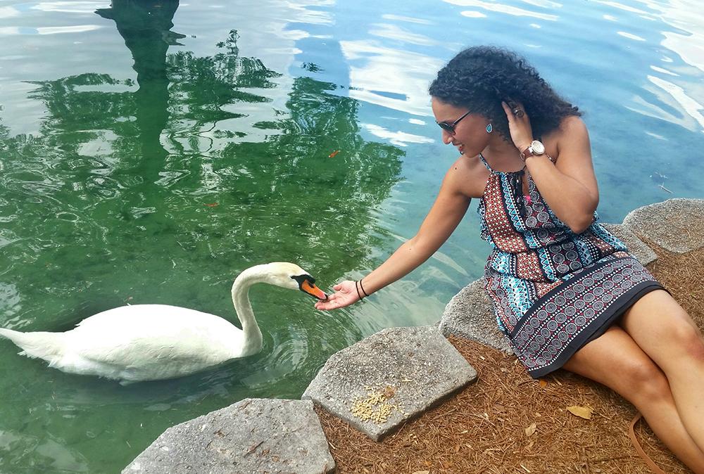 Swan.feeding.Lake Eola144446-01_W