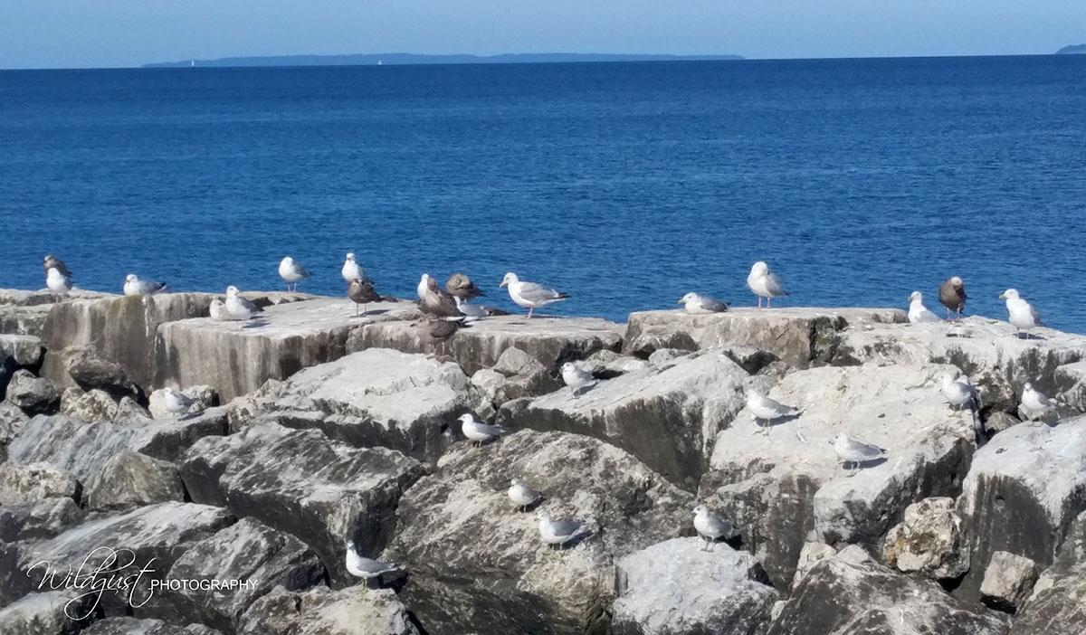 08.29.birds.Fishtown425W