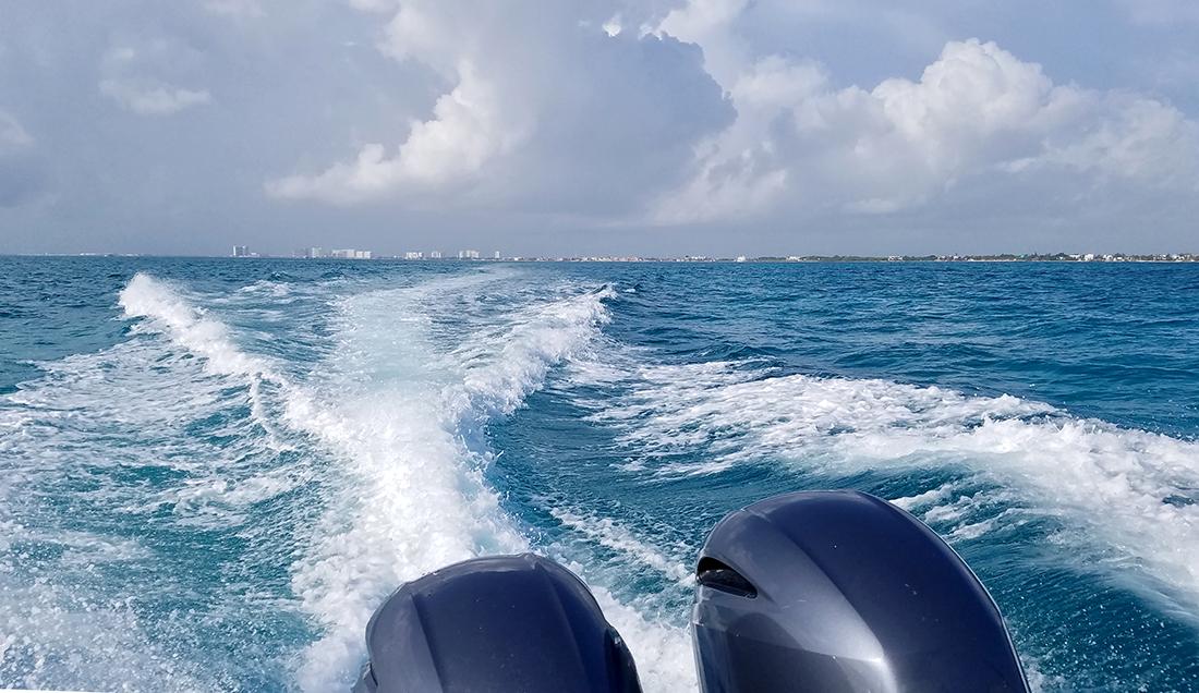 whalesharktour.water084155w