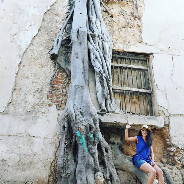 Exploring trees within the city literally Welcome to Cuba havanacubahellip