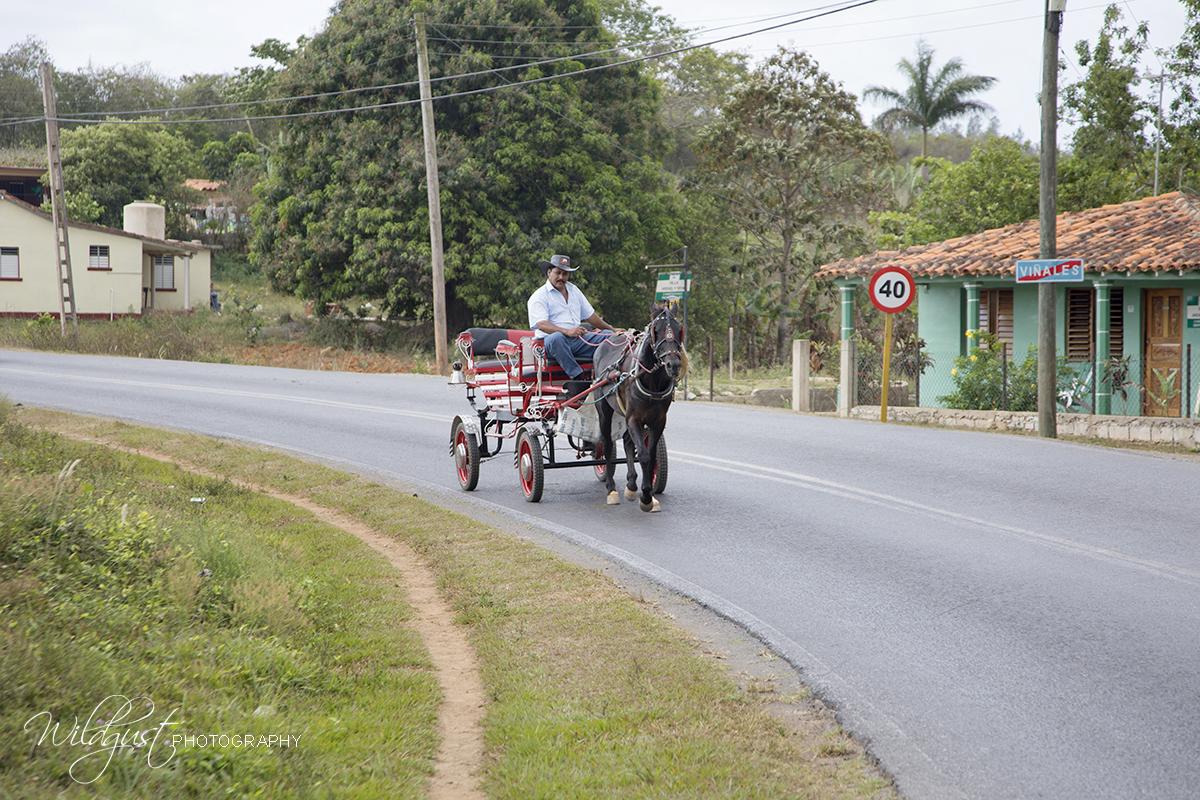 Vinales.Cuba.horsecarriage 2Q5A2352W