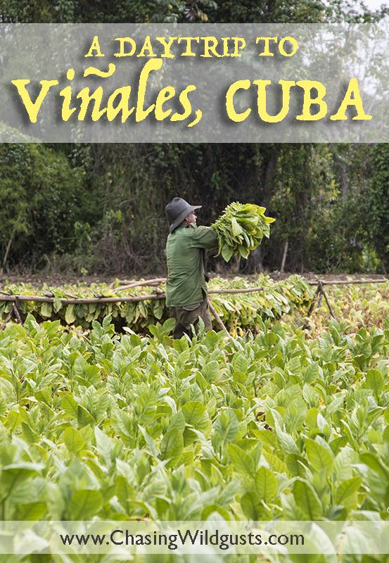 Cuba.Vinales.tobaccofarm.pinterest.2Q5A2316w