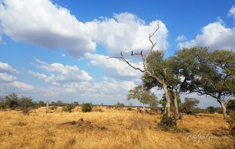 southafrica.safari.bush.