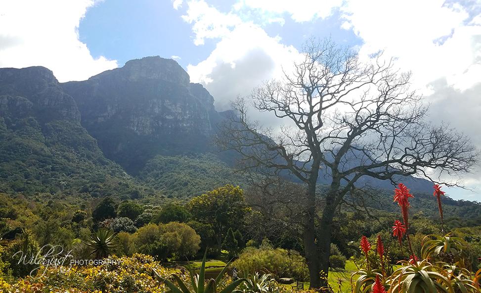 SouthAfrica.BotanicalGArdens.20170831_125436W