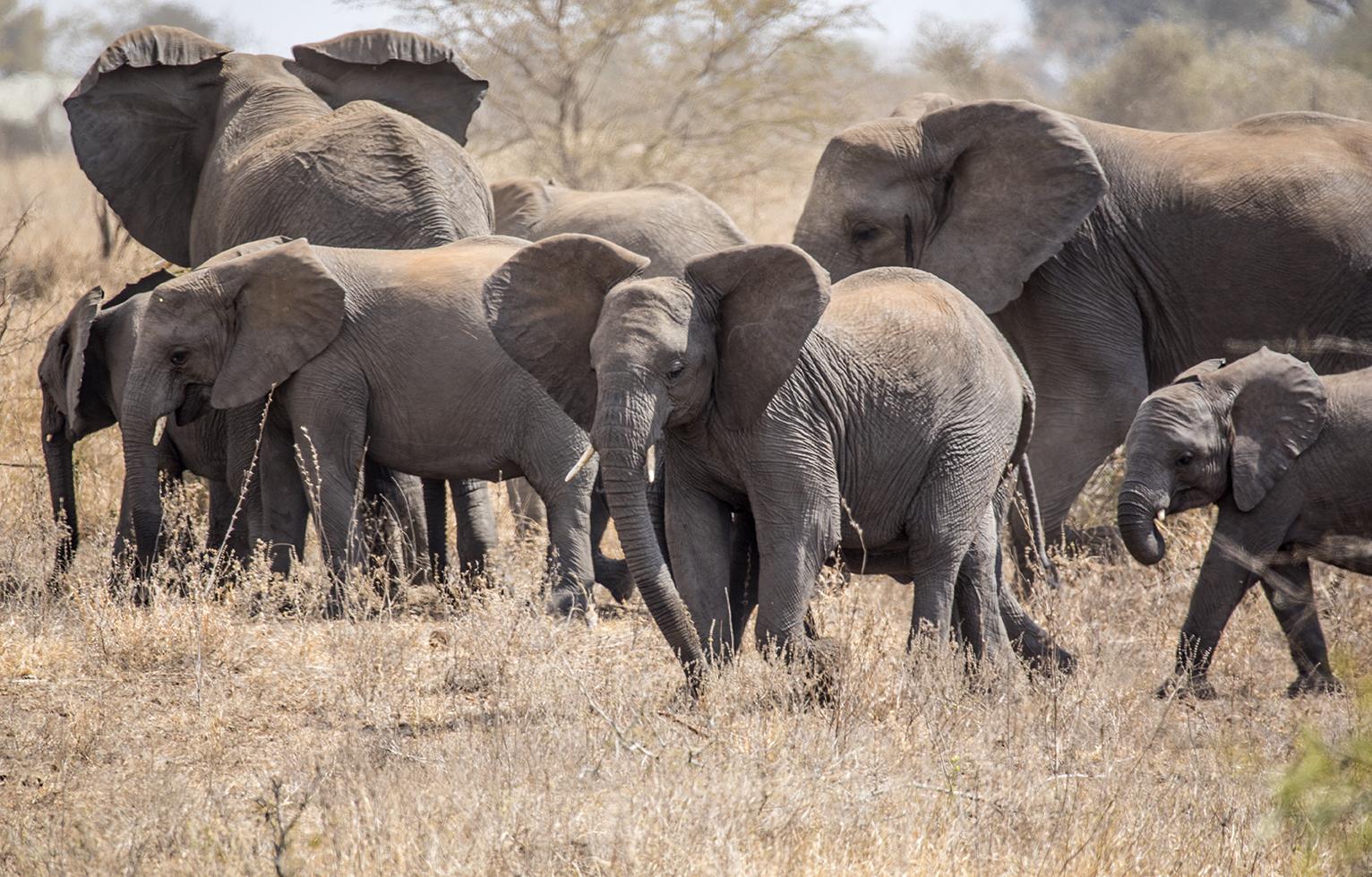 SouthAfrica.Safari.2Q5A0107w