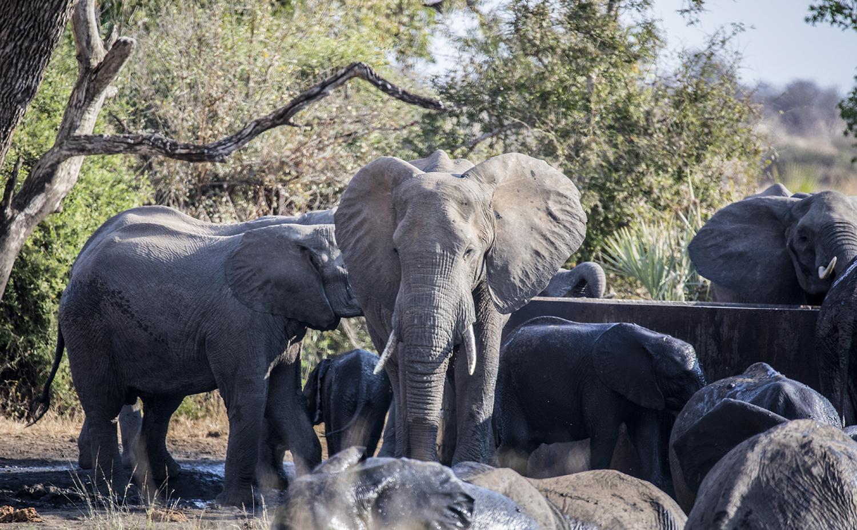 southafrica.safari.elephants.2Q5A0278w