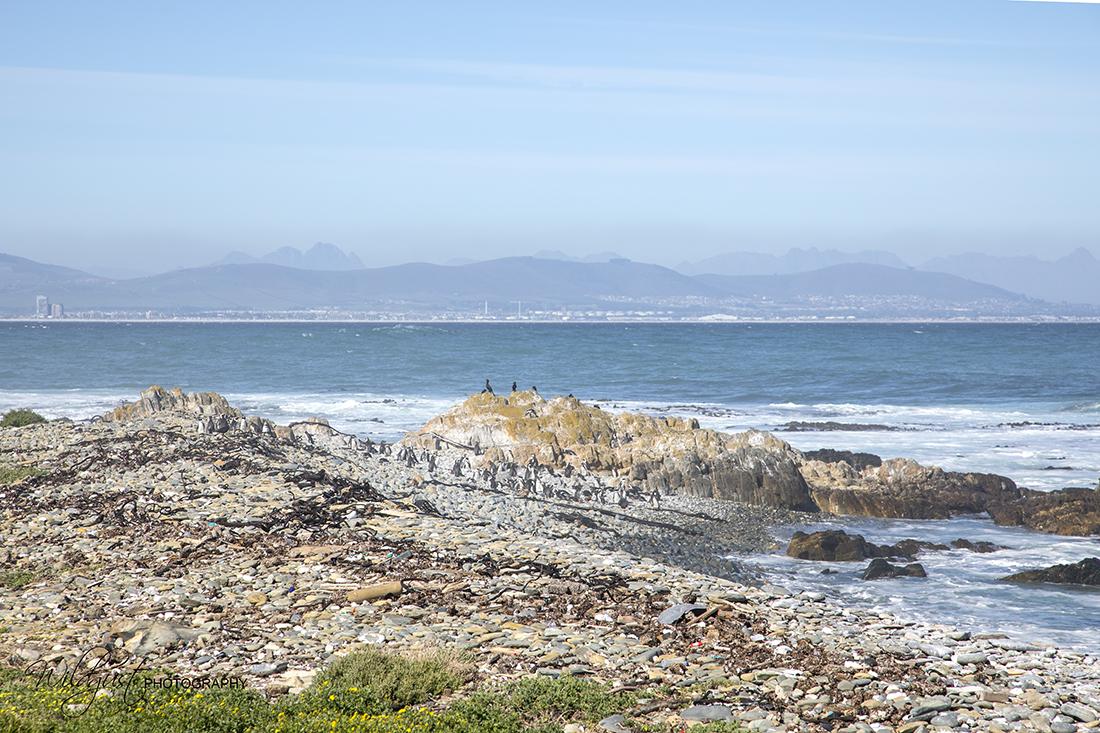 SouthAfrica.RobbenIsland.2Q5A7477w