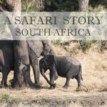 A Safari Story, South Africa