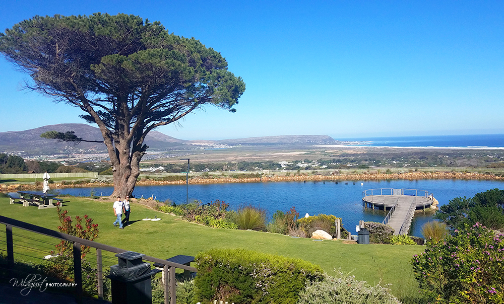 SouthAfrica.CapePointVineyards.