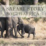 FeaturePhoto.safari.elephant.2Q5A0272web